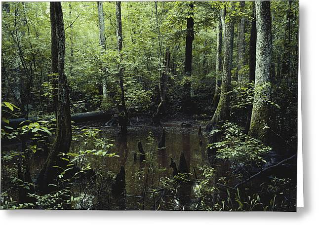 Francis Beidler Forest Greeting Card