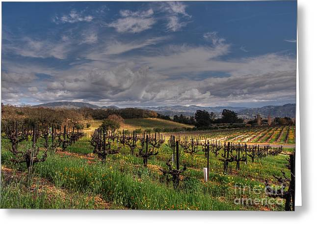 Francis Ford Coppola Winery Greeting Card