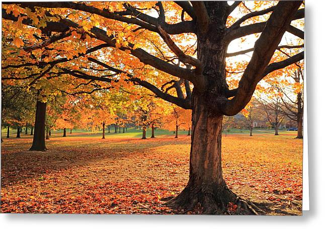 Greeting Card featuring the photograph Francis Park Autumn Maple by Scott Rackers