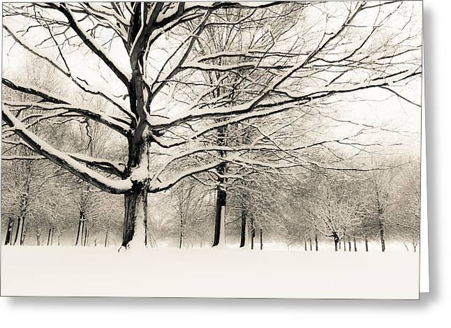 Francis Park In Snow Greeting Card by Scott Rackers