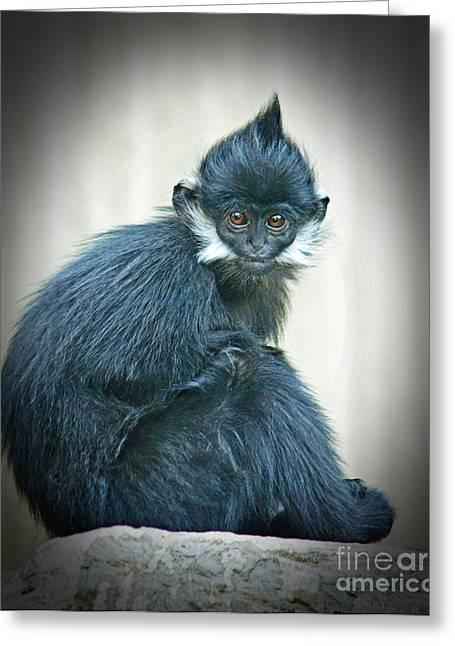 Francois Langur Monkey II Greeting Card by Jim Fitzpatrick