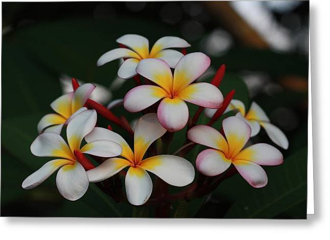 Greeting Card featuring the photograph Frangipani Bouquet by Keith Hawley