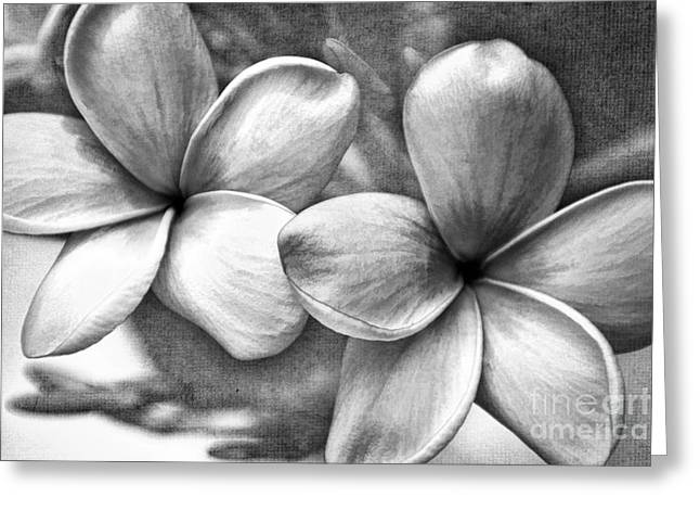Frangipani In Black And White Greeting Card by Peggy Hughes