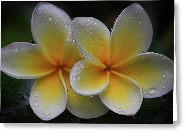Frangipani Pair Greeting Card