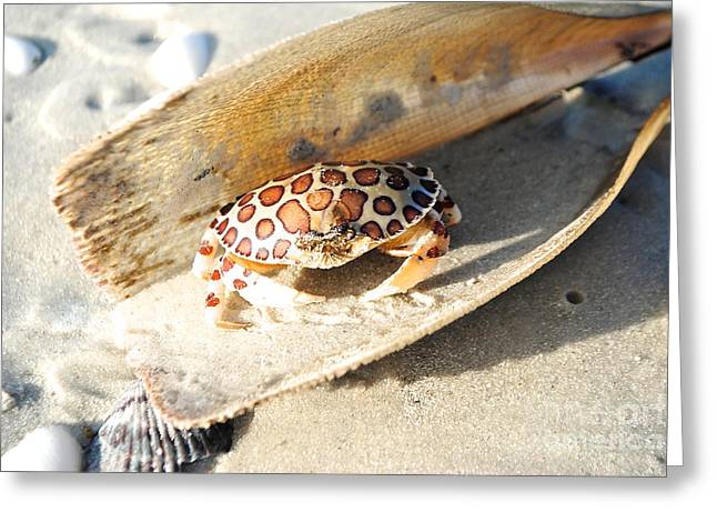Frank The Spotted Crab Of Anna Maria Greeting Card