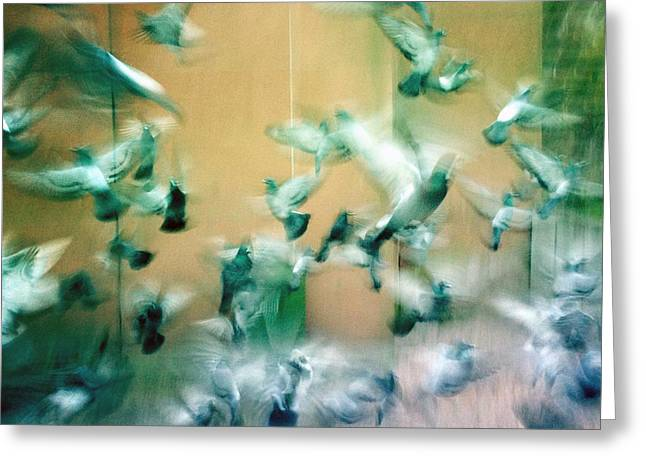 Frantic Wing Beats - Many Scared Pigeons Greeting Card