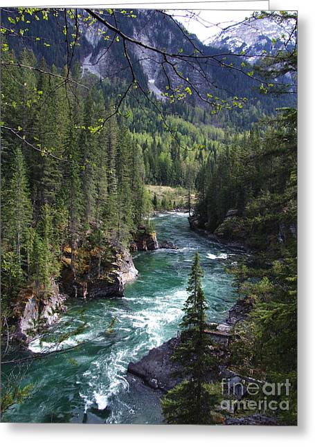 Greeting Card featuring the photograph Fraser River - British Columbia by Phil Banks