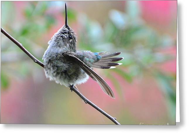 Greeting Card featuring the photograph Fredrick Singing In The Rain by Debby Pueschel