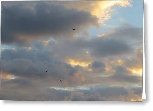 Greeting Card featuring the photograph Free As A Bird by Jean Marie Maggi