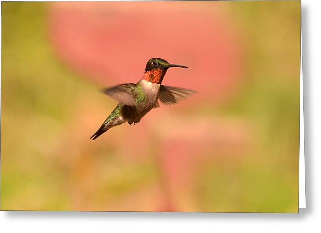 Free As A Bird Greeting Card by Lori Tambakis