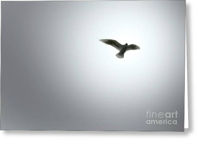 Free Bird Greeting Card by Gregory Dyer