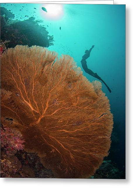 Free Diver Swimming Over Sea Fan Greeting Card