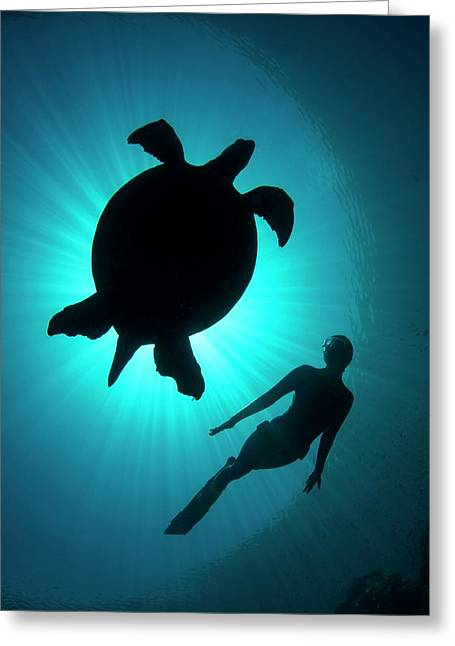Free Diver With A Turtle Greeting Card