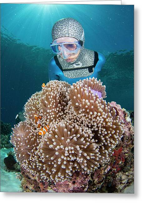 Free Diver With Anemonefish Greeting Card by Scubazoo