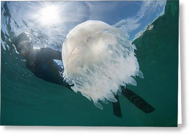 Free Diver With Jellyfish Greeting Card