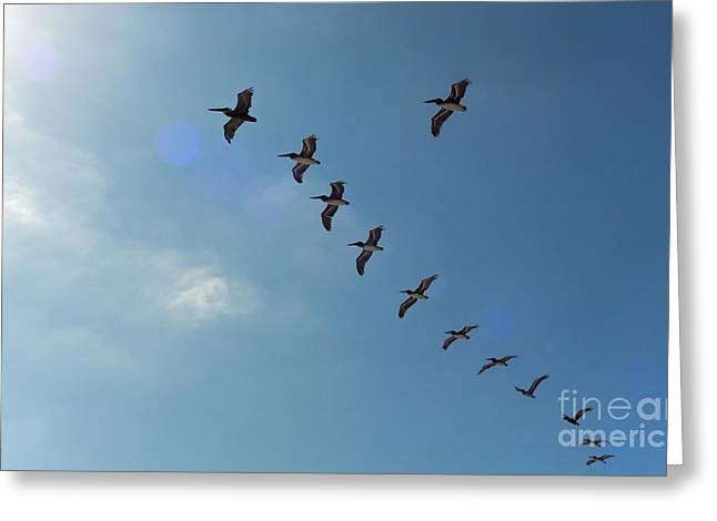 Free Flight Greeting Card by Peggy Hughes