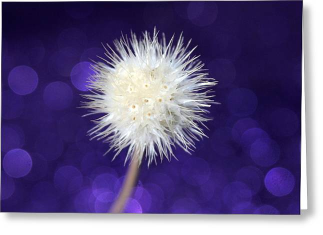 Free Greeting Card by Krissy Katsimbras