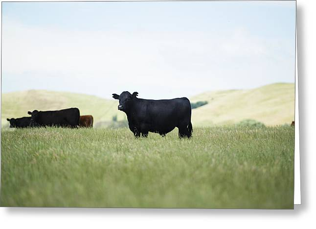 Free Range Greeting Card by Joe Wigdahl