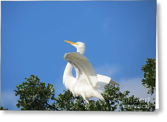 Free To Fly Greeting Card by Feva  Fotos