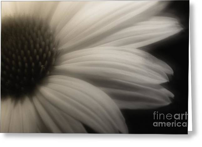 Free Will Greeting Card by Jean OKeeffe Macro Abundance Art