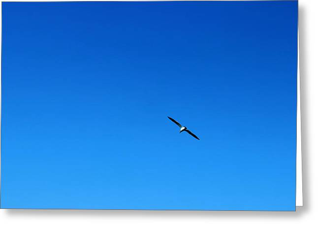 Freedom And Solitude Greeting Card by Phoresto Kim
