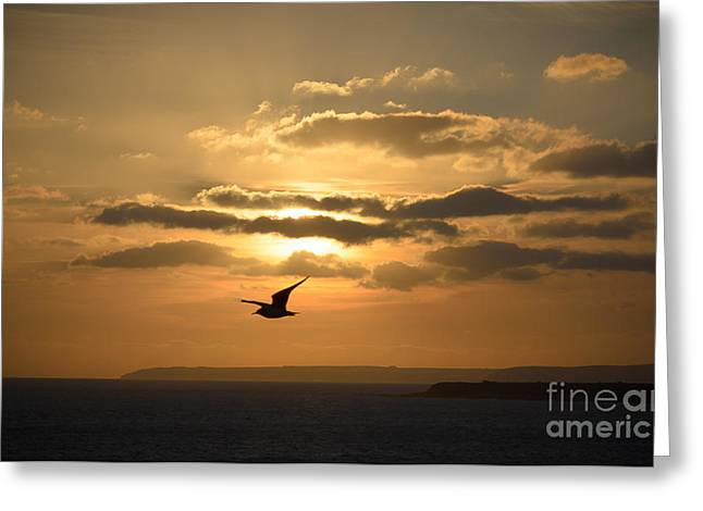Freedom Greeting Card by OUAP Photography
