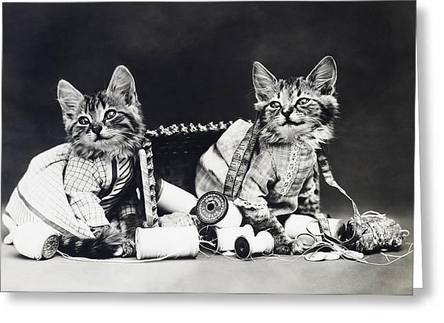 Frees Kittens, C1915 Greeting Card