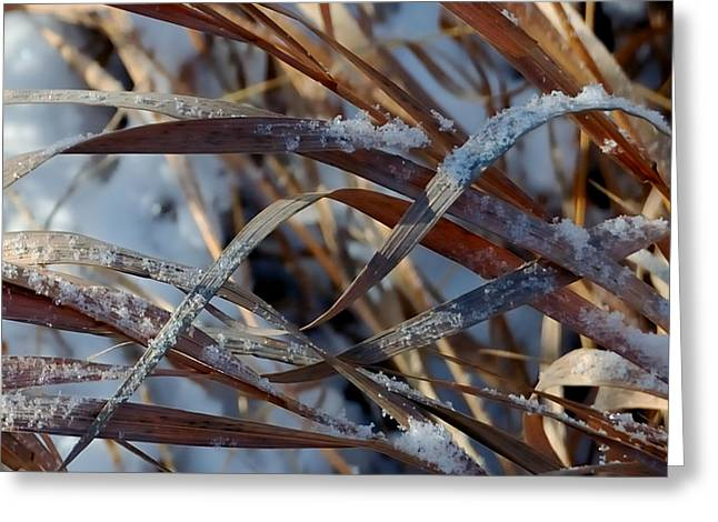 Freeze Dried Greeting Card by Steven Milner