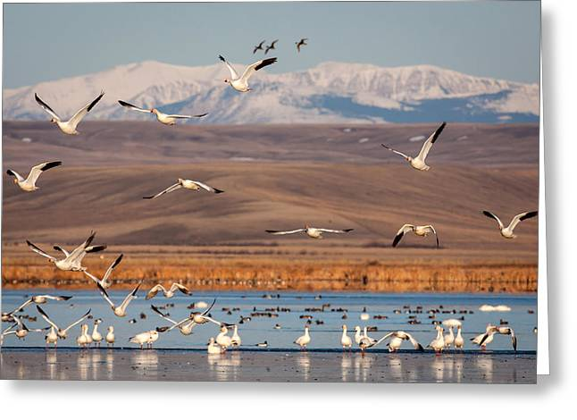 Greeting Card featuring the photograph Freeze Out Lake Morning by Jack Bell