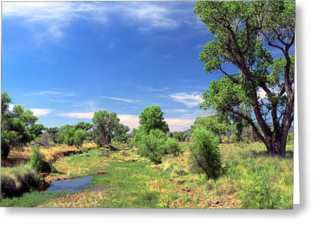 Fremont Cottonwood Trees In Field, San Greeting Card by Panoramic Images