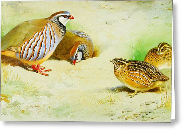 French Partridge And Chicks Greeting Card by Celestial Images