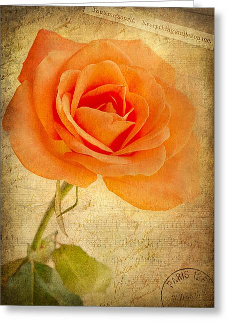 French Rose Greeting Card