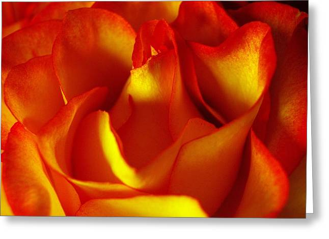 Fresh Bloom Greeting Card by Tom Druin