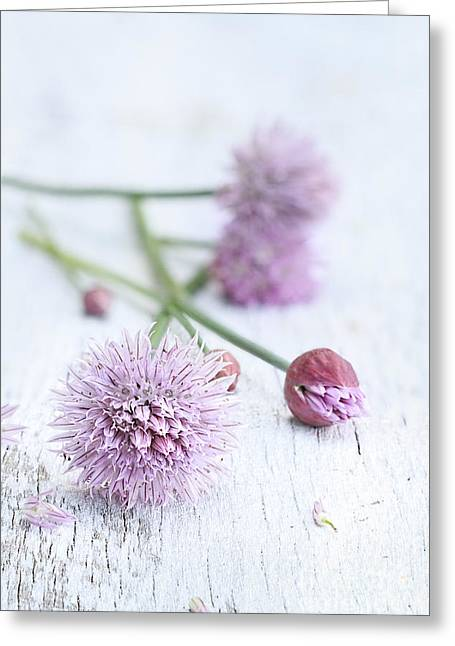 Fresh Chives Greeting Card by Stephanie Frey