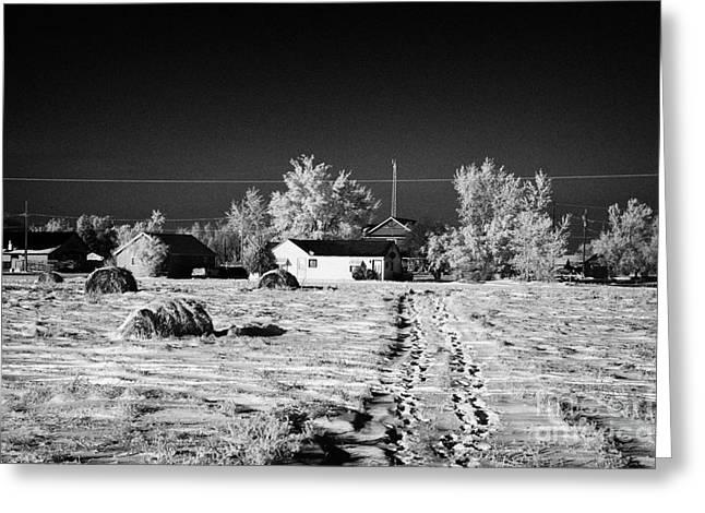 fresh footprints crossing deep snow in field towards small rural village of Forget Saskatchewan Cana Greeting Card