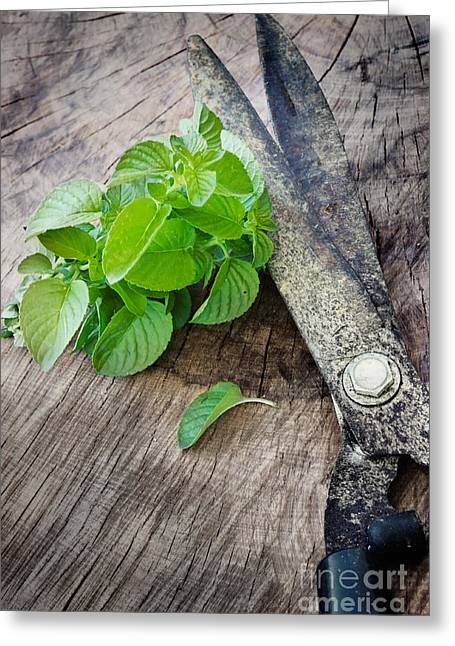 Fresh Harvested Aromatic Mint Greeting Card