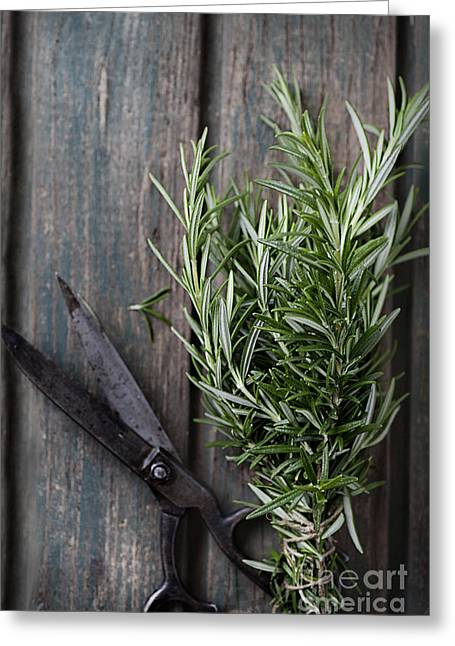 Fresh Herbs Greeting Card by Mythja  Photography
