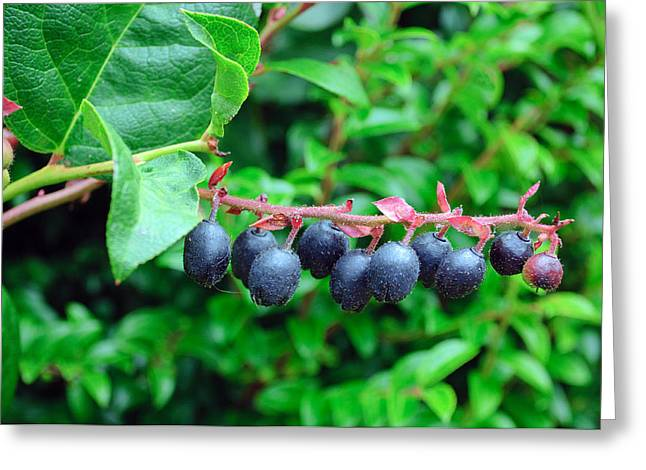 Fresh Huckleberries Greeting Card