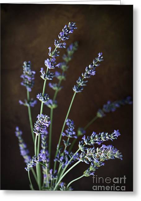 Fresh Lavender Greeting Card by Mythja  Photography