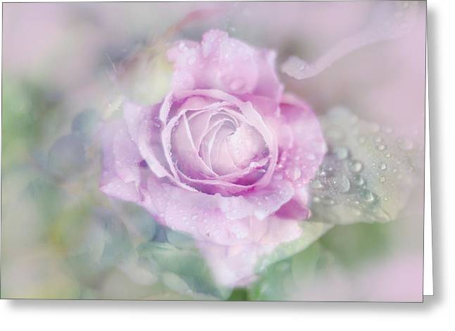Fresh Morning Rose. Floral Abstract Greeting Card
