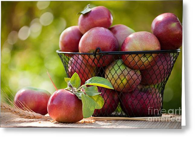 Fresh Picked Apples Greeting Card by Cindy Singleton