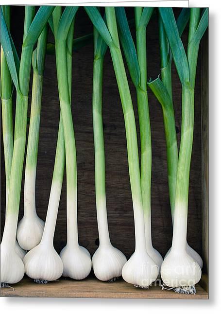 Fresh Picked Garlic Greeting Card by Edward Fielding