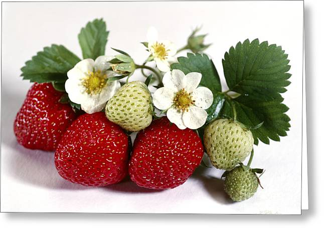 Fresh Picked Strawberries Greeting Card by Iris Richardson