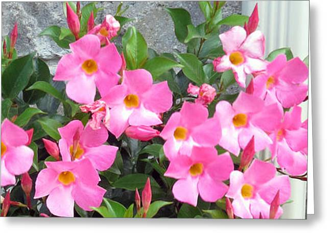 Fresh Pink Flowers Blossom Supporting The Tiled Wall Nature Natural Gardens   Greeting Card