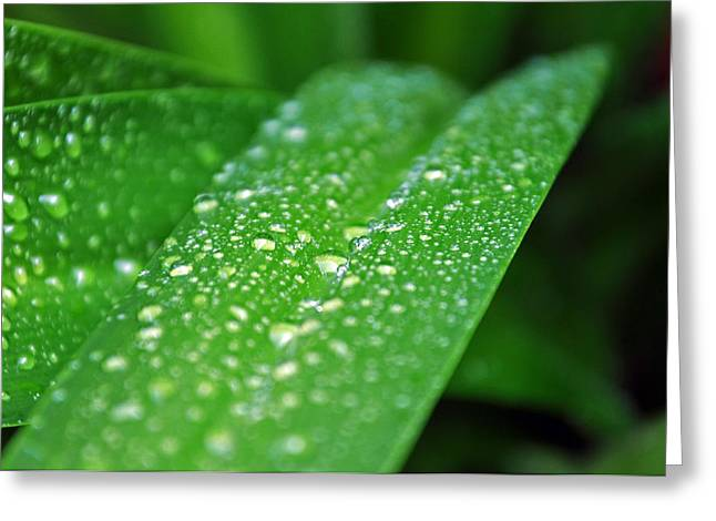 Fresh Rain Drops Greeting Card