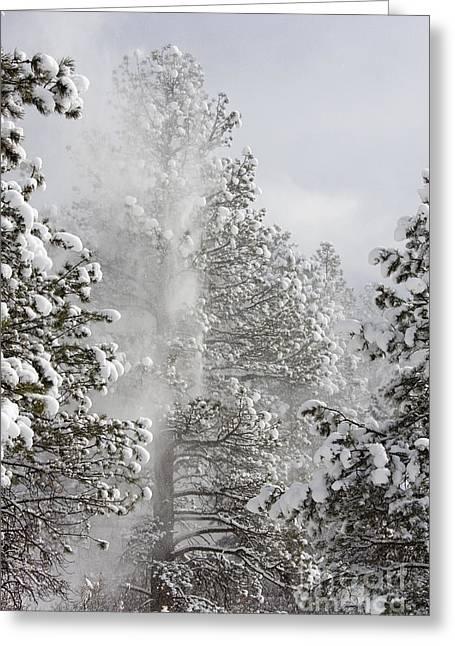 Fresh Snow Greeting Card