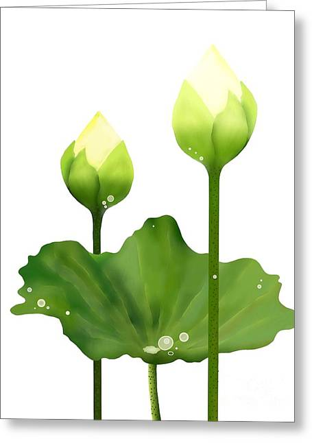 Fresh White Lotus Flowers And Leaf On White Background Greeting Card by Iam Nee