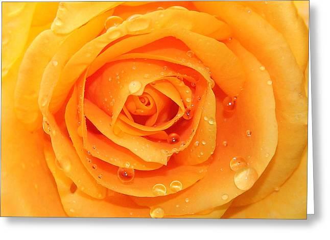 Fresh Yellow  Greeting Card by Mark Ashkenazi