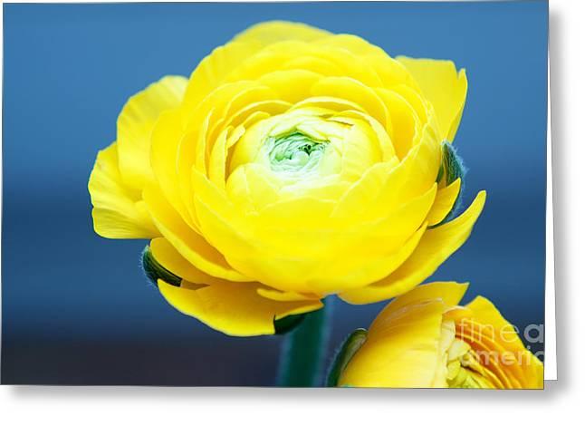 Fresh Yellow Greeting Card by Tatjana Senz