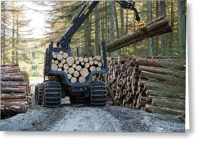 Freshly Cut Timber In Grizedale Forest Greeting Card by Ashley Cooper